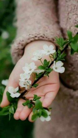-ارغوان؛ این چه رازیست؟  که هربار بهار  با عزای دل ما میآید…