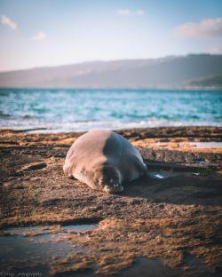 حال ندارم برم اونور، شما همینجوری رد شین برین دریا
