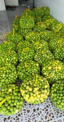 الان لیمو کیلویی ۱۰ هزار تومنه، البته از دست باغدار؛ بیشتر هم به شیراز می برن، اگر مستقیم به ارومیه، سمنان، اصفهان و سایر شهرها بازرگانی می شد، با قیمت بسیار ارزون تری به دست مصرف کننده نهایی می رسید، ولی همونطور که می دونید ۲۰ ساله مسوولا در حال اصلاح شبکه توزیع هستن، یعنی پس دیگه خودتون دست بکار شید و با دهیارای روستاهای تولید کننده برا تهیه محصول های کشاورزی تماس بگیرید( توصیه ای به تجار کشاورزی مملکتم )