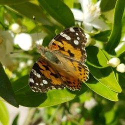 این پروانه قشنگا کجا میرن.هرچی زشت و کج و کوره دور بر ماهه :/:))