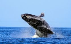 تصاویر نهنگ http://raician.ir/post/482