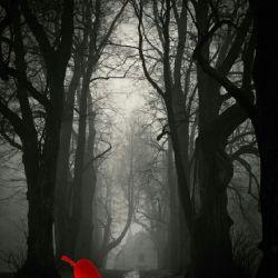 تندبادی در شب همهی برگهای درختان را کنده است تنها یک برگ باقی مانده رقصندهای تنها بر شاخهای برهنه  با این مثال خشونت ادعا میکند که بله البته گاه به گاه لطیفهی کوچکی را دوست میدارد.    بعداز سالیان سال خشکسالی  امشب در محاصره سیل قرار گرفتیم خدا عاقبتمون رو  ختم بخیر کنه