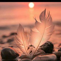 هنوز ایستاده ام  تا عاشقانه هایم را  در گور مخملی ترین فریاد  دفن کنم  دنیای غریبیست  لحظه های گنگ واژه های نامانوس  وپیکر خسته خورشید. . . . .  سحر خونین است  بوف کوری بیدارم میکند  چشمهایم قحطی اشک  وهذیانی که ذهن قلم را  در شهوت نوشتن میسوزاند  آهای اهالی بحران  راه زندگی  در پشت ذهن های مه آلود هنوز ناپیداست  غریبه ای خواهد آمد  با بغلی مهر پنهان  تمام هستی ام را  ترجمه خواهد کرد  ومن ایستاده در غبار  دنبال عاشقانه هایم. ...