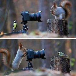 تقدیم به نگاه های شما، به خصوص عکاسای گرامی