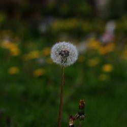 شادی؛ نه فضیلت است، نه لذت، نه این و نه آن، بلکه به مفهوم رشد است.  ما وقتی شاد هستیم که در حال رشد باشیم...