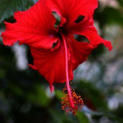 گمان میکنم هر آدمی  باید پشت پنجره اتاقش، یک گلدان گل شمعدانی داشته باشد که هر بار گلهایش خشک میشود و دوباره گل میدهد،  یادش بیفتد که روزهای غم هم به پایان میرسند.  ⠀