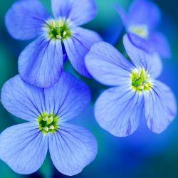 تقدیم به؛   انسانهای پرازانرژی مثبت  انسانهای پرازآرامش،  انسانهای پرازعشق وامید،  تقدیم به شماهمراهان عزیز  خودتون گل،زندگیتون گلبارون ⚘⚘⚘⚘⚘⚘⚘ عکس از خودمه تقدیمه شما عزیزان تگ و کپی آزاده