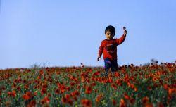 سرخ رو باش  مثل غنچه ی باغ  دل بده  دل بورز  دل خوشدار