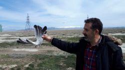 شکارچیان غیر مجاز مبادرت به شکار پرندگان مهاچر مینمایند که جا دارد برای حفاظت از آنها اقدامات جدی معمول گردد