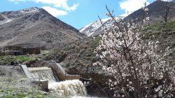 بهار زیبای اراک