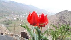 گلی برای شما دوستان عزیز گلم منطقه نظم آباد اراک