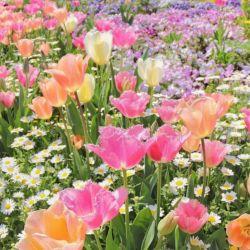 گر نداری دانش ترکیب رنگ بین گل ها زشت یا زیبا نکن خوب دیدن، شرط انسان بودن است عیب را در این و آن پیدا نکن