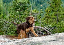 فیلم سینمایی مسیر بازگشت یک سگ به خانه  www.filimo.com/m/ev3WX
