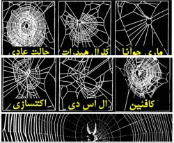 براى اینكه تاثیرات مواد مخدر و روان گردان را بررسى كنند تعدادى عنكبوت را در معرض این موادقرار دادند تا تاثیر مواد بر تارهایشان و عملكرد مغزى شان را بسنجند. نتایج فوق حاصل این تحقیق است