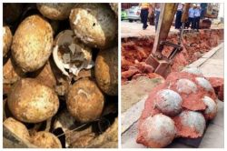 ۲۰تا تخم ۲۵۰۰ساله از گوری کاوش شده توسط باستانشناسان در چین (یکیش شکسته)  تا کنون حدود ۴۳ تخم دایناسور که طی عملیات راهسازی در چین شناسایی شده.