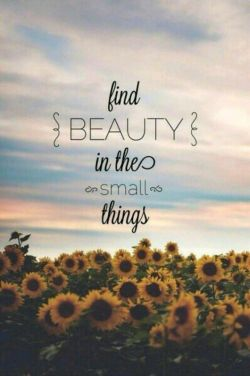 find ☄BEAUTY☄ in the small things