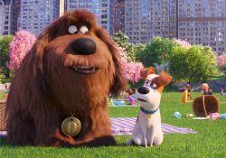 انیمیشن زندگی مخفی حیوانات خانگی 2  www.filimo.com/m/Fmwhs