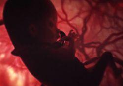 فیلم کوتاه تاسوکی  www.filimo.com/m/5tYhz