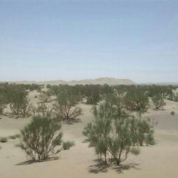جنگل درختان تاق وقیج  حوالی روستای کویریه کمال اباد