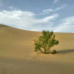تبارک الله احسن الخالقین  دوستان توجه کنید تو دل کویر بدون اب این درخت چقدر سرسخت واستواره     هرچقد زندگی مشکل باشه بازم تسلیم نشید مطما باشید یکی  هوامونو داره
