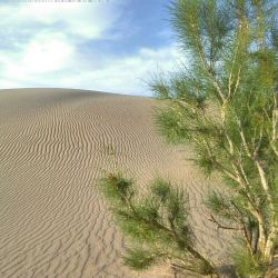تو این تصویر جز قدرت خالقم چیزی نمیبینم  صحرای سوزان با دمای ۴۰c   اما زندگی در جریان