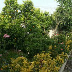 باغچه خونه ما