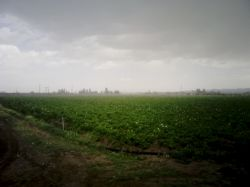 #hamrah1 اینجا صحرای خودمونه ، سیب زمینی کاریم !