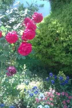 عاشق گل رز هستم ..:)