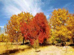 پاییز 92