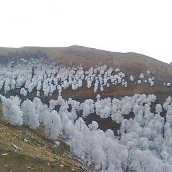 یخ زدن درخت تو فصل پاییز