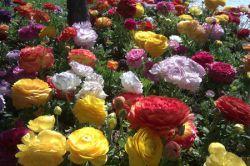 #hamrah1 باغ گل در اصفهان ♥خیلی قشـنـگ بود