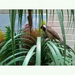 پرنده ی دوست داشتنی من