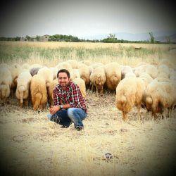 گوسفندای بیتربیت...   !