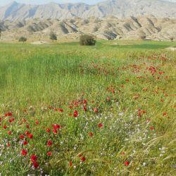 گوشه ای از زیبایی های بهار خوزستان