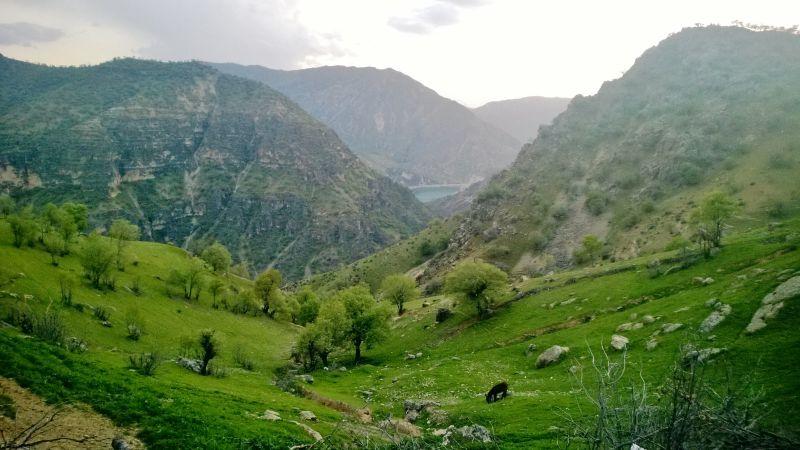 طبیعت سبز است.اینجا ایران است. #hamrah1