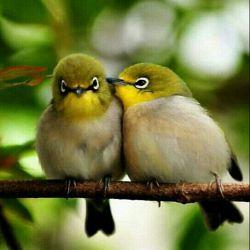 به نظرتون جنسیت این پرنده ها چیه؟! الف.هردو مونث ب.گزینه الف ج.گزینه الف و ب د.همه موارد