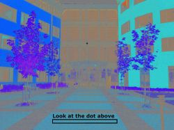 چند ثانیه به نقطه ی سیاه در وسط عکس نگاه کنید . سپس عکس سیاه و سفیدی ظاهر می شود که شما آن را رنگی می بینید !!