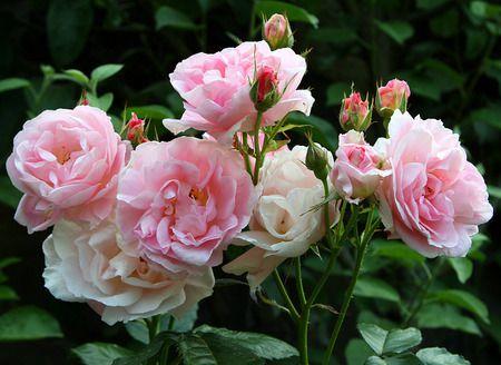 سلام دوستان من این گل زیبا را تقدیم میکنم به شما دوستان گل و عزیز لنزور-امیدوارم خوشتون بیاد.