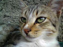 این عکس رو با گوشی Sony Ericsson C902 گرفتم