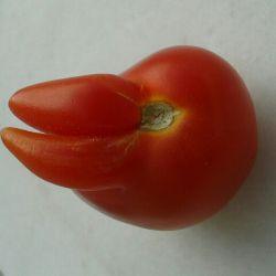 از بس که فروشنده با بلندگو داد زد بادمجان قرمز داریم این گوجه ...