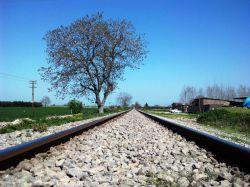 تک درخت آرزو هایم پژمرده شد....