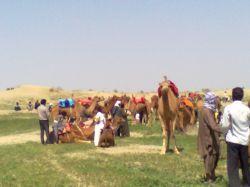 جشنواره کشاورزی شهرستان91