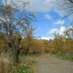 پاییز زیبا........کار خودم .......:-)