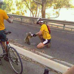 این صحنه مال مسابقه دوچرخه سواریه کوآلای بیچاره تو اون هوای گرم از تشنگی از انسان ها کمک خواسته و یکی از دوچرخه سوارا بهش آب داده.این ینی انسانیت هنوز نمرده :-)