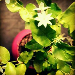#hamrah1 #photography #art #nature #natural_environment #طبیعت #محیط_زیست #هنر #عکاسی
