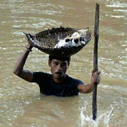 سیل هند و نجات بچه گربه ها (انسانیت)