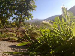 طبیعت زیباست ...