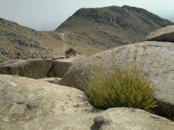 حاشیه رشته کوه زاگرس ابادی وحش و کوه سفید