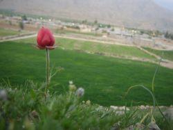 #hamrah1  روستای القچین سفلی شهرستان چرام