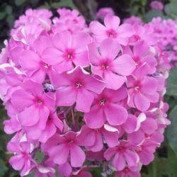 گلهاى روستاى اونار,مشگین شهر,اردبیل